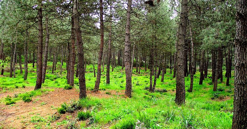 aydos ormani kosu yolu