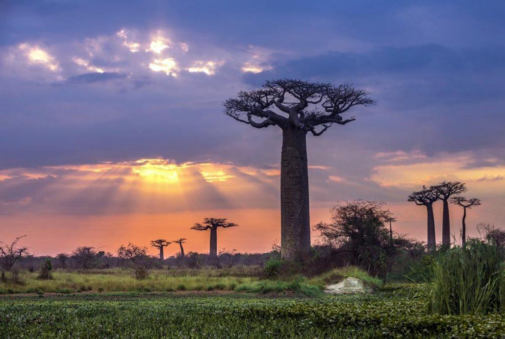 afrika gezilecek yerler- madagaskar