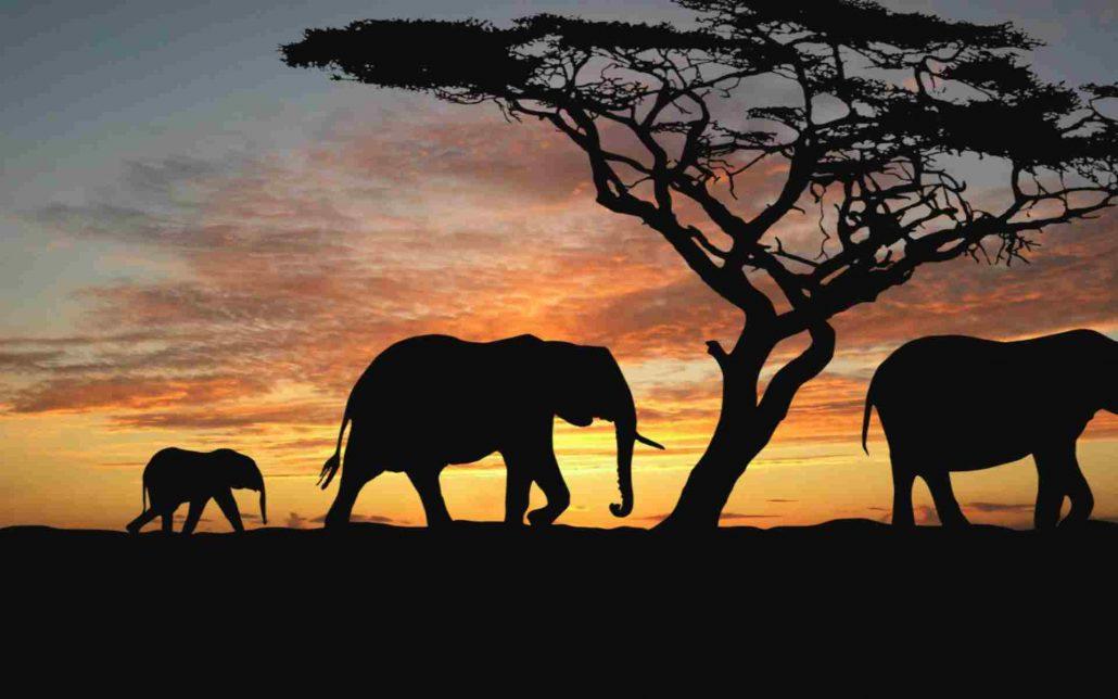 afrikada safari - afrika gezi rehberi