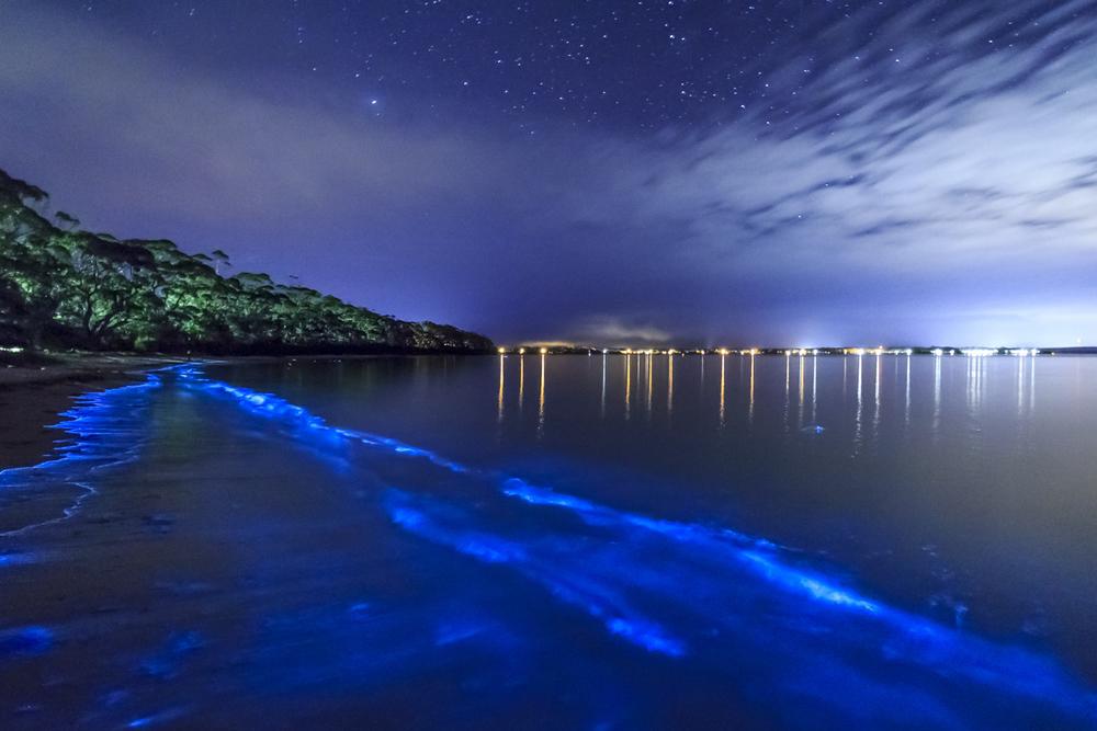 bio bay deneyimi - porto riko