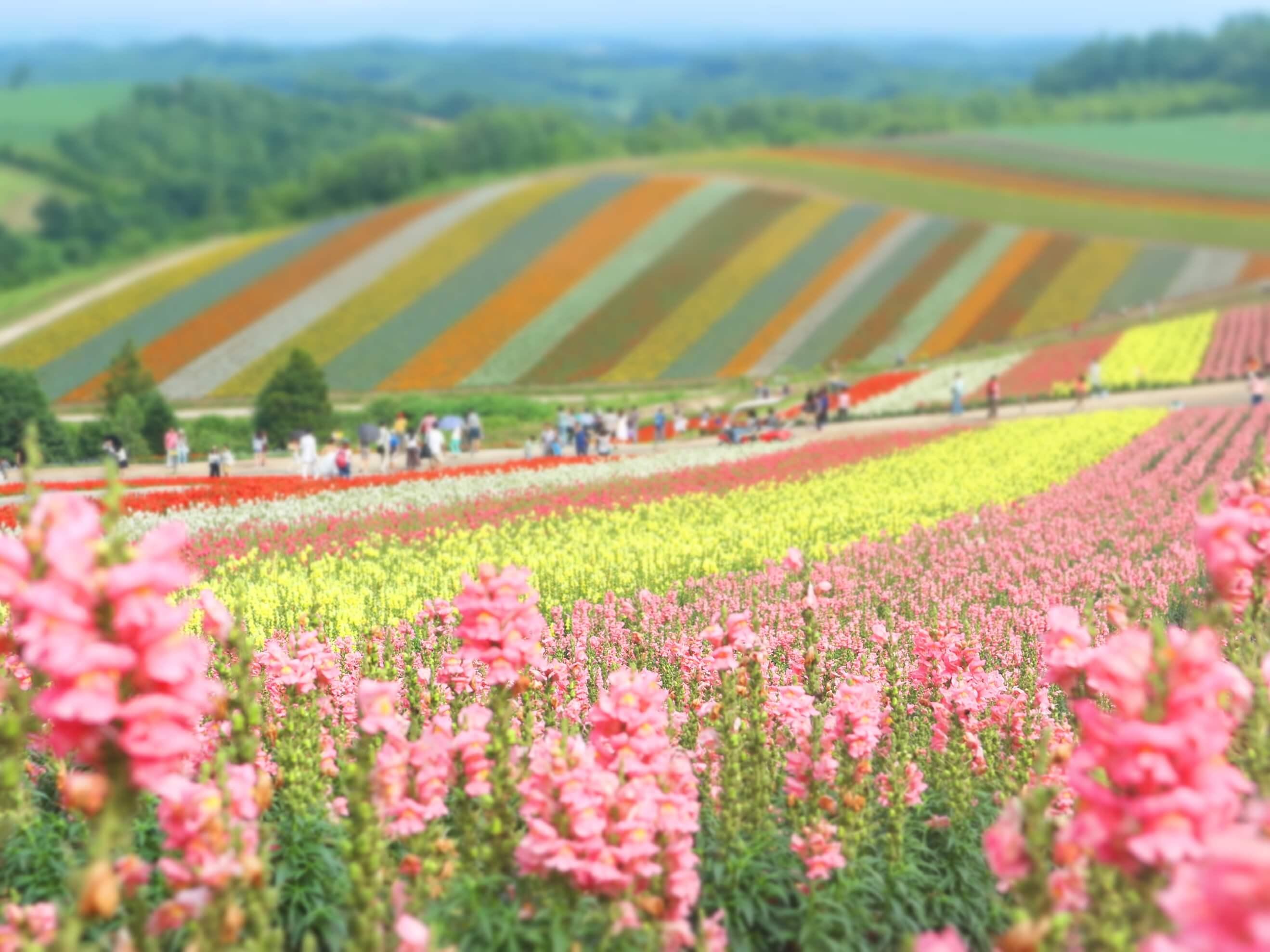 shikisai tepesi - kuzey japonya gezilecek yerler