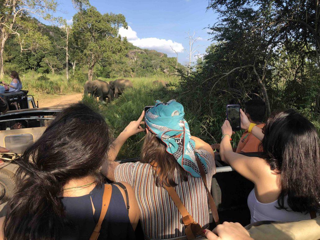 sri lanka gezi rehberi - safari