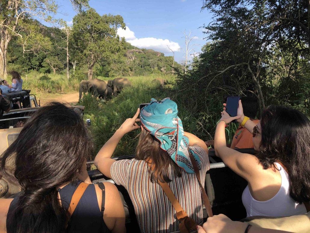 Safari - Sri Lanka'da Ne Yapılır